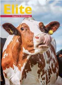 Cover: Elite
