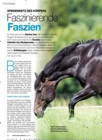 Titelbild der Ausgabe 80/2018 von SPINNENNETZ DES KÖRPERS: Faszinierende Faszien. Zeitschriften als Abo oder epaper bei United Kiosk online kaufen.
