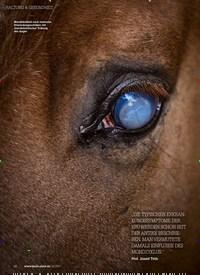 Titelbild der Ausgabe 20/2019 von PERIODISCHE AUGENENTZÜNDUNG: Der getrübte Blick. Zeitschriften als Abo oder epaper bei United Kiosk online kaufen.