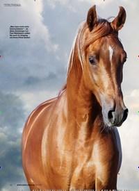 Titelbild der Ausgabe 50/2019 von VERHALTEN UND KOMMUNIKATION: Die Psyche des Pferdes. Zeitschriften als Abo oder epaper bei United Kiosk online kaufen.