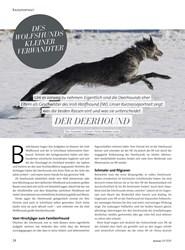Titelbild der Ausgabe 3/2020 von DES WOLFSHUNDS KLEINER VERWANDTER. Zeitschriften als Abo oder epaper bei United Kiosk online kaufen.