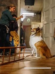 Titelbild der Ausgabe 3/2020 von Lassie kommt zurück!. Zeitschriften als Abo oder epaper bei United Kiosk online kaufen.