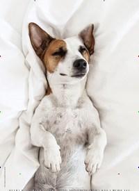 Titelbild der Ausgabe 2/2021 von Die Entspannungsformel: (Hund + Mensch) x Bindung = Entspannung pur. Zeitschriften als Abo oder epaper bei United Kiosk online kaufen.
