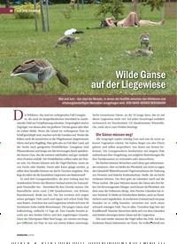 Titelbild der Ausgabe 2/2019 von Wilde Gänse auf der Liegewiese. Zeitschriften als Abo oder epaper bei United Kiosk online kaufen.