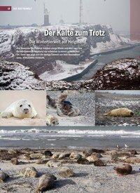 Titelbild der Ausgabe 4/2019 von Der Kälte zum Trotz: Die Wintertierwelt auf Helgoland. Zeitschriften als Abo oder epaper bei United Kiosk online kaufen.
