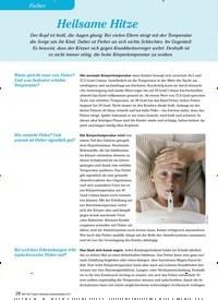 Titelbild der Ausgabe 3/2012 von Fieber: Heilsame Hitze. Zeitschriften als Abo oder epaper bei United Kiosk online kaufen.