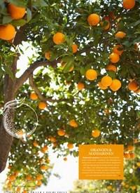Titelbild der Ausgabe 2/2021 von Leckeres mit Zitrusfrüchten SO SPRITZIG!. Zeitschriften als Abo oder epaper bei United Kiosk online kaufen.