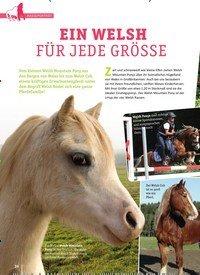 Titelbild der Ausgabe 1/2019 von EIN WELSH FÜR JEDE GRÖSSE. Zeitschriften als Abo oder epaper bei United Kiosk online kaufen.
