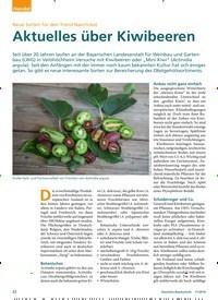 Titelbild der Ausgabe 11/2019 von Neue Sorten für den Trend Naschobst: Aktuelles über Kiwibeeren. Zeitschriften als Abo oder epaper bei United Kiosk online kaufen.