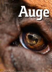 Titelbild der Ausgabe 4/2019 von Augein Auge mit Isegrim: HUNDEARBEIT IM WOLFSGEBIET. Zeitschriften als Abo oder epaper bei United Kiosk online kaufen.