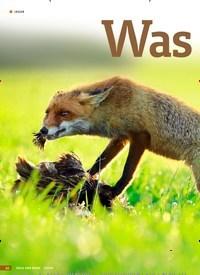 Titelbild der Ausgabe 7/2019 von Waswirklich: hilft: FUCHSJAGD. Zeitschriften als Abo oder epaper bei United Kiosk online kaufen.
