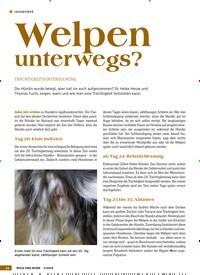 Titelbild der Ausgabe 7/2019 von Welpen unterwegs?: TRÄCHTIGKEITSUNTERSUCHUNG. Zeitschriften als Abo oder epaper bei United Kiosk online kaufen.