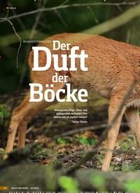 Titelbild der Ausgabe 10/2019 von MARKIERVERHALTEN Der Duft der Böcke. Zeitschriften als Abo oder epaper bei United Kiosk online kaufen.