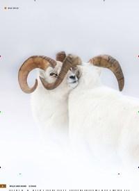 Titelbild der Ausgabe 3/2020 von Fast unsichtbar. Zeitschriften als Abo oder epaper bei United Kiosk online kaufen.