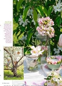 Titelbild der Ausgabe 4/2019 von TRÄUMEN unter Apfelbäumen. Zeitschriften als Abo oder epaper bei United Kiosk online kaufen.