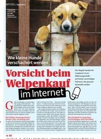 Titelbild der Ausgabe 1/2021 von Topthema: Wie kleine Hunde verschachert werden: Vorsicht beim Welpenkauf im Internet. Zeitschriften als Abo oder epaper bei United Kiosk online kaufen.