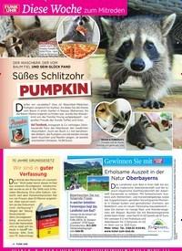 Titelbild der Ausgabe 20/2019 von Diese Woche zum Mitreden: Süßes Schlitzohr: Pu m pkin. Zeitschriften als Abo oder epaper bei United Kiosk online kaufen.