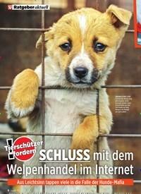 Titelbild der Ausgabe 8/2020 von SCHLUSS mit dem Welpenhandel im Internet. Zeitschriften als Abo oder epaper bei United Kiosk online kaufen.