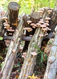 Titelbild der Ausgabe 5/2018 von Pilze anbauen im eigenen Garten. Zeitschriften als Abo oder epaper bei United Kiosk online kaufen.