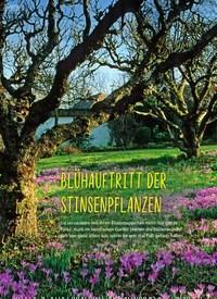 Titelbild der Ausgabe 1/2019 von BLÜHAUFTRITT DER STINSENPFLANZEN. Zeitschriften als Abo oder epaper bei United Kiosk online kaufen.