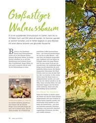 Titelbild der Ausgabe 5/2019 von Großartiger Walnussbaum. Zeitschriften als Abo oder epaper bei United Kiosk online kaufen.