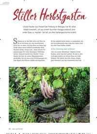 Titelbild der Ausgabe 5/2020 von Stiller Herbstgarten. Zeitschriften als Abo oder epaper bei United Kiosk online kaufen.