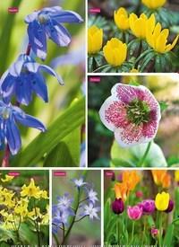 Titelbild der Ausgabe 5/2020 von GARTEN: Fürs Frühjahr säen & pflanzen. Zeitschriften als Abo oder epaper bei United Kiosk online kaufen.