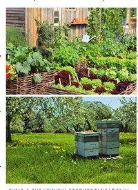Titelbild der Ausgabe 3/2019 von Ein Garten voller Bienen. Zeitschriften als Abo oder epaper bei United Kiosk online kaufen.