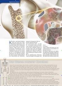 Titelbild der Ausgabe 41/2020 von Osteoporose. Zeitschriften als Abo oder epaper bei United Kiosk online kaufen.