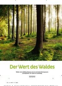Titelbild der Ausgabe 3/2019 von Der Wert des Waldes. Zeitschriften als Abo oder epaper bei United Kiosk online kaufen.