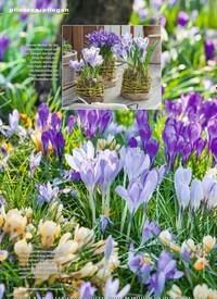 Titelbild der Ausgabe 2/2019 von Hokus Krokus Fidibus. Zeitschriften als Abo oder epaper bei United Kiosk online kaufen.