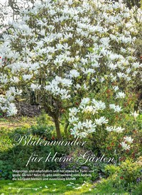 Titelbild der Ausgabe 4/2019 von Blütenwunder für kleine Gärten. Zeitschriften als Abo oder epaper bei United Kiosk online kaufen.
