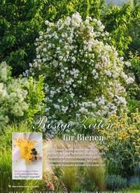 Titelbild der Ausgabe 6/2019 von Rosige Zeiten für Bienen. Zeitschriften als Abo oder epaper bei United Kiosk online kaufen.