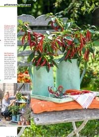 Titelbild der Ausgabe 7/2019 von Leuchtfeuer im Topf Chili & Paprika. Zeitschriften als Abo oder epaper bei United Kiosk online kaufen.