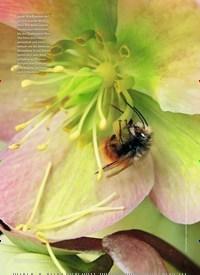 Titelbild der Ausgabe 1/2019 von Faszinierende Wildbienen. Zeitschriften als Abo oder epaper bei United Kiosk online kaufen.