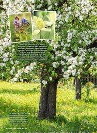 Titelbild der Ausgabe 3/2019 von Aus Liebe zur Natur Blüten für Wildbienen. Zeitschriften als Abo oder epaper bei United Kiosk online kaufen.