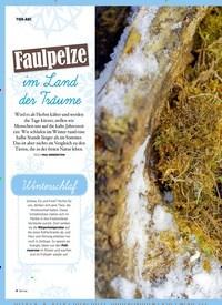 Titelbild der Ausgabe 4/2019 von TIER-ABC: Faulpelze im Land der Träume. Zeitschriften als Abo oder epaper bei United Kiosk online kaufen.