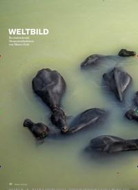 Titelbild der Ausgabe 6/2020 von WELTBILD. Zeitschriften als Abo oder epaper bei United Kiosk online kaufen.