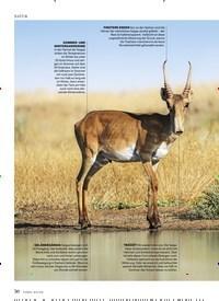 Titelbild der Ausgabe 6/2020 von EIN WUNDER NAMENS SAIGA-ANTILOPE. Zeitschriften als Abo oder epaper bei United Kiosk online kaufen.