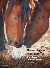 Titelbild der Ausgabe 4/2019 von Wie wichtig sind Mineralstoffe?. Zeitschriften als Abo oder epaper bei United Kiosk online kaufen.