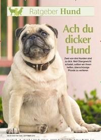 Titelbild der Ausgabe 9/2019 von Ratgeber Hund: Ach du dicker Hund. Zeitschriften als Abo oder epaper bei United Kiosk online kaufen.