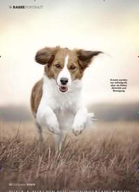 Titelbild der Ausgabe 5/2019 von Der Kromfohrländer: Aktiver Springinsfeld. Zeitschriften als Abo oder epaper bei United Kiosk online kaufen.