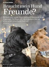 Titelbild der Ausgabe 7/2020 von TITELTHEMA: Braucht mein Hund Freunde?. Zeitschriften als Abo oder epaper bei United Kiosk online kaufen.