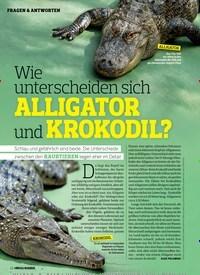Titelbild der Ausgabe 3/2019 von FRAGEN & ANTWORTEN: Wie unterscheiden sich ALLIGATOR und KROKODIL?. Zeitschriften als Abo oder epaper bei United Kiosk online kaufen.
