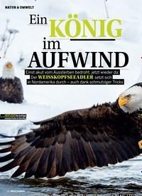 Titelbild der Ausgabe 3/2019 von Ein KÖNIG im AUFWIND. Zeitschriften als Abo oder epaper bei United Kiosk online kaufen.