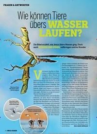 Titelbild der Ausgabe 6/2019 von Wie können Tiere übers WASSER LAUFEN?. Zeitschriften als Abo oder epaper bei United Kiosk online kaufen.