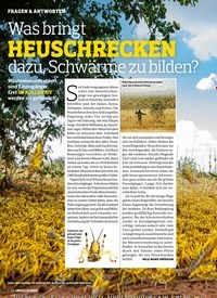 Titelbild der Ausgabe 4/2020 von Was bringt HEUSCHRECKEN dazu, Schwärme zu bilden?. Zeitschriften als Abo oder epaper bei United Kiosk online kaufen.