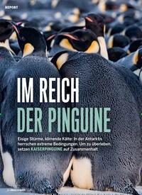 Titelbild der Ausgabe 1/2021 von Report: IM REICH DER PINGUINE. Zeitschriften als Abo oder epaper bei United Kiosk online kaufen.