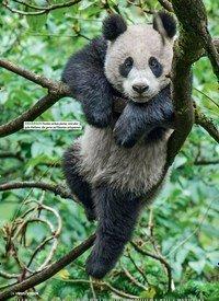 Titelbild der Ausgabe 6/2018 von Pandas hautnah. Zeitschriften als Abo oder epaper bei United Kiosk online kaufen.