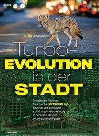 Titelbild der Ausgabe 1/2019 von Turbo-EVOLUTION in der STADT. Zeitschriften als Abo oder epaper bei United Kiosk online kaufen.